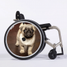 Flasque fauteuil roulant Chiot